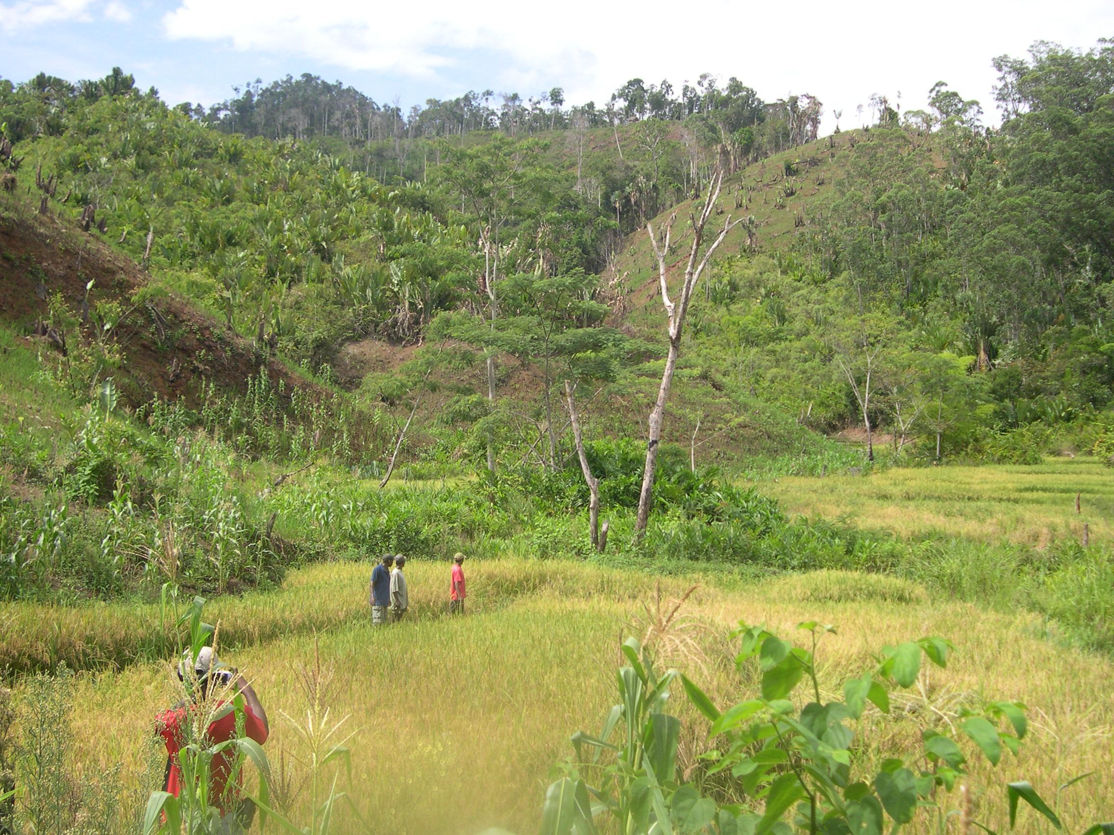 Chroniques malgaches 3 : un «point chaud» environnemental