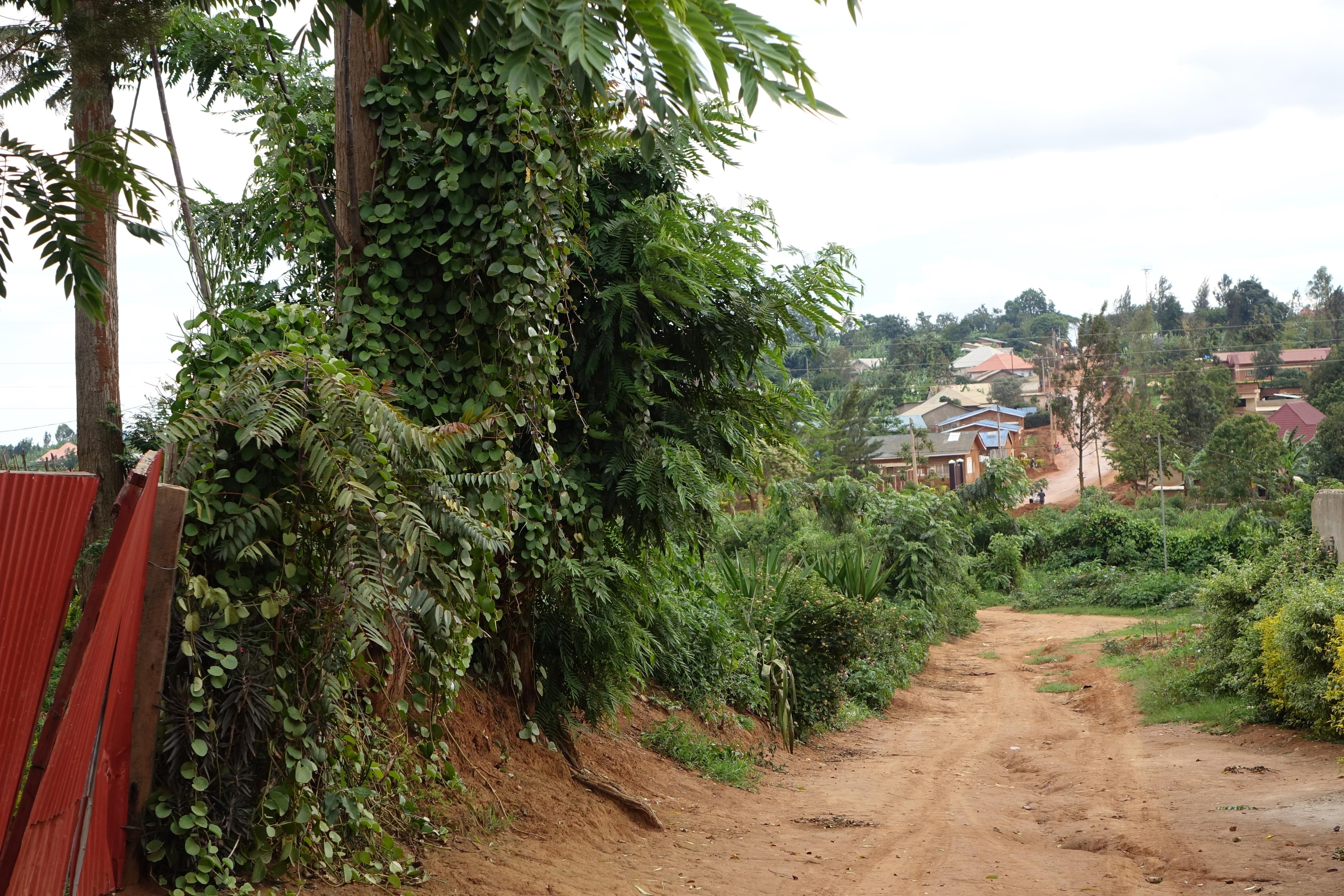 Rwanda : retour sur une histoire tragique (2/2)