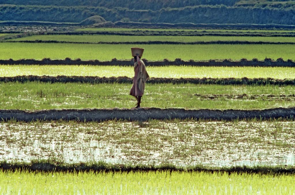 Retard de l'Afrique : le danger de la référence abusive au néo-colonialisme